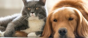 Pet Friendly Pest Control - Is it safe for birds, cats and dogs?